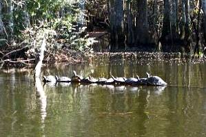 Dunnellon real estate, the Rainbow river wildlife.