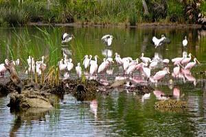 Yankeetown Florida Wildlife